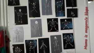 upoznajemo telo: kostur
