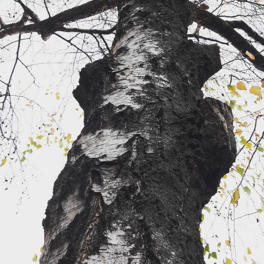 #decemberphotochallenge #day3 #wood
